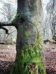 Kult[ur] Kraftort Ritzung im Baum