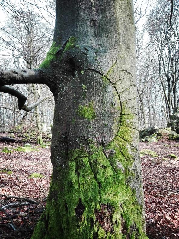 Kraftort- Baum mit Sonne