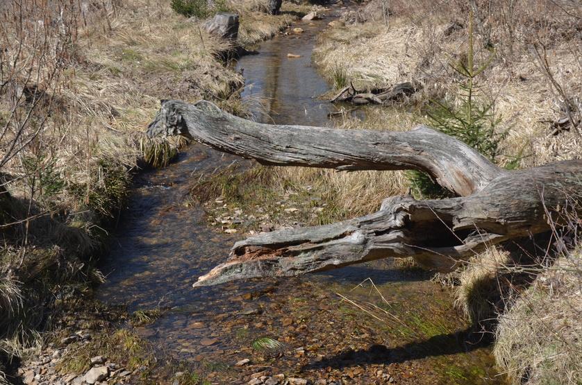 Bachlauf Soonwald, Wasser-Wald-Bienen
