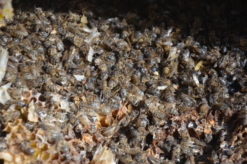 Bienenstock, tot, Baum