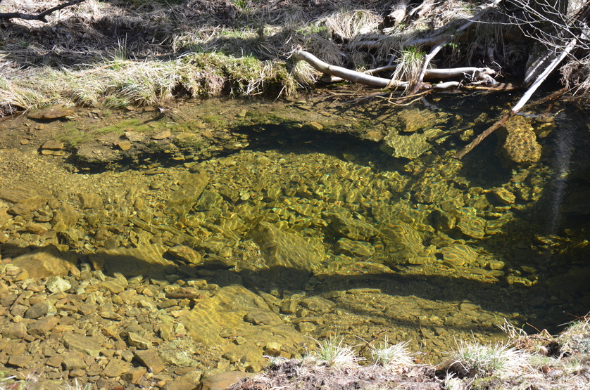 natürliches Wasserbecken im Soonwald