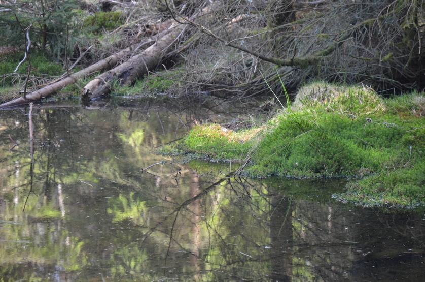 kleiner Teich im Soonwald, Wasser-Wald-Bienen